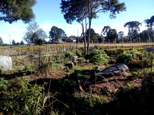Horta UFSC Curitibanos